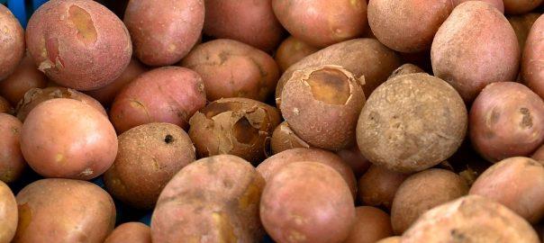 2016.06.29. minosegi krumpli