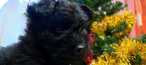 2016.12.21. kiskutya a fa alatt