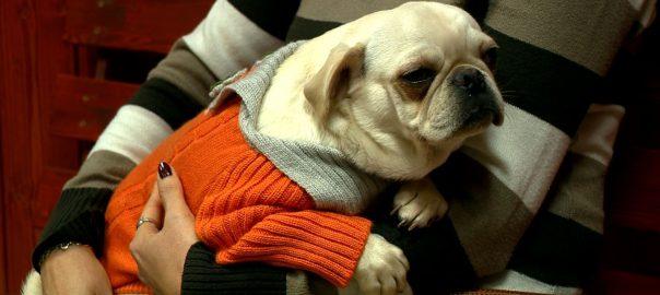2016.12.28. kutyahideg ellen kutyacipo