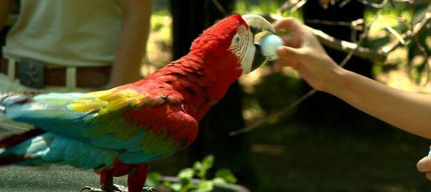 2017.07.11. papagajshow