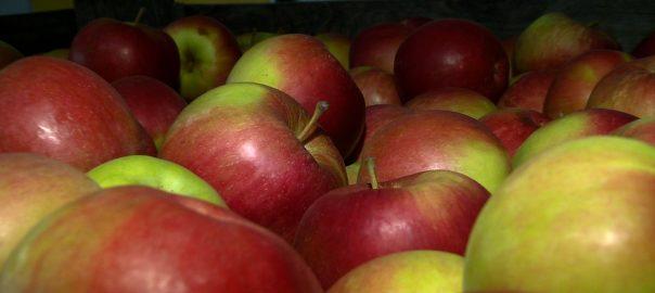 Nemcsak az ipari, de az étkezési alma ára is beszakadni látszik – mondta Jakab István, a Magyar Gazdakörök és Gazdaszövetkezetek Szövetségének elnöke az M1 csatornának.