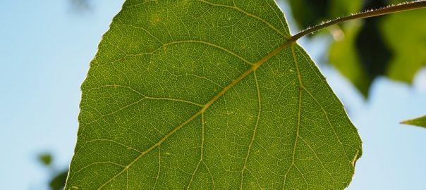 leaf-671661_960_720
