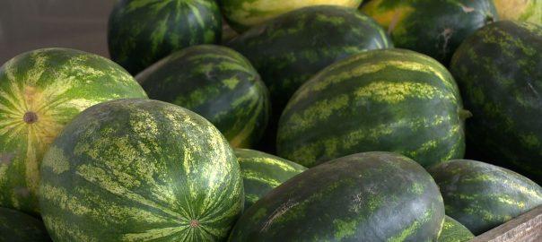 Később indult a dinnyetermesztés megyénkben, így tovább is lesz kapható a gyümölcs.
