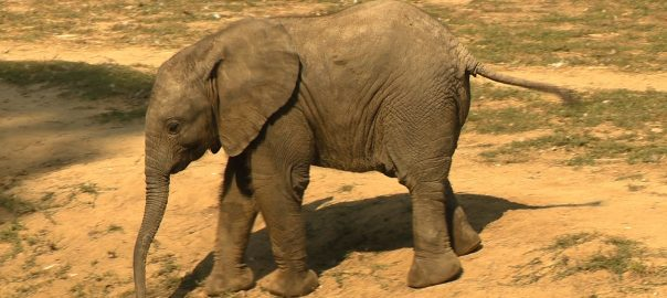 nevet kapott a kiselefant